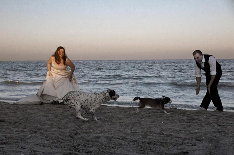 mascotas y novios en la playa